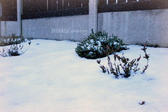 14 January Snow